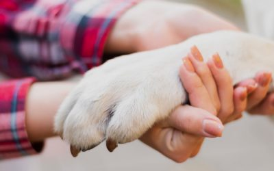 Incontinence in Pets – Everything You Need to Know